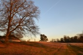 Winter dusk, knole