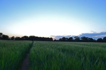 Final Downe walk field at dusk