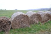 Hay bales on walk 3, point 6