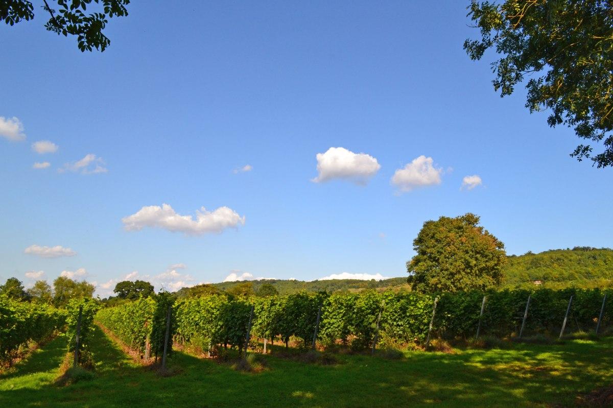 Mount Vineyard, Shoreham,