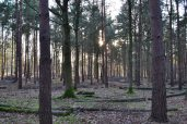 2015-02-17 17.04.knole pines