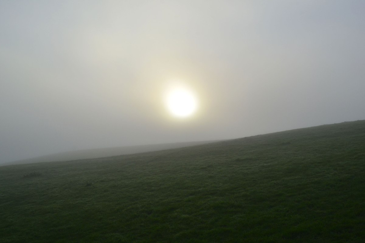 Fog at Scords wood