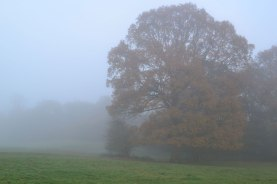 Beech tree in fog, Ide Hill