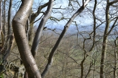 Looking out from the greensand escarpment at One Tree Hill