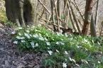 Wildflowers in spring, One Tree Hill, Sevenoaks