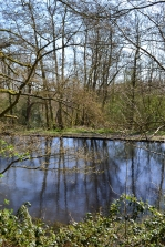 Ram pump pond, Scords Wood, near Ide Hill (walk 4)