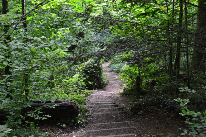 The steps down through the ancient woods, point 11
