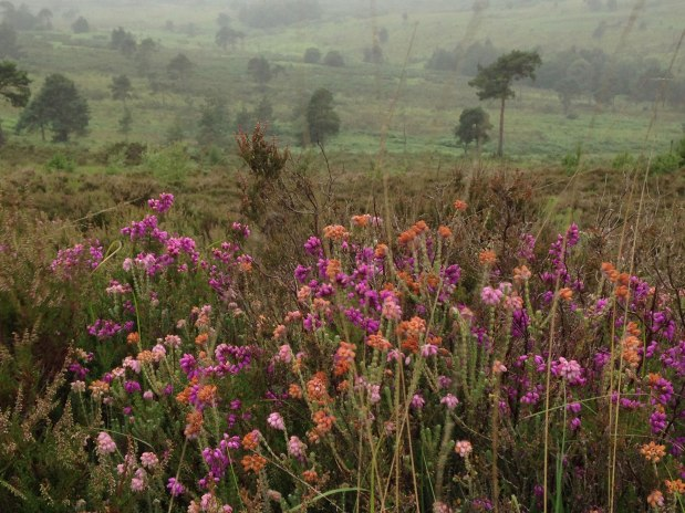 Ashdown Forest – great even on rainy days