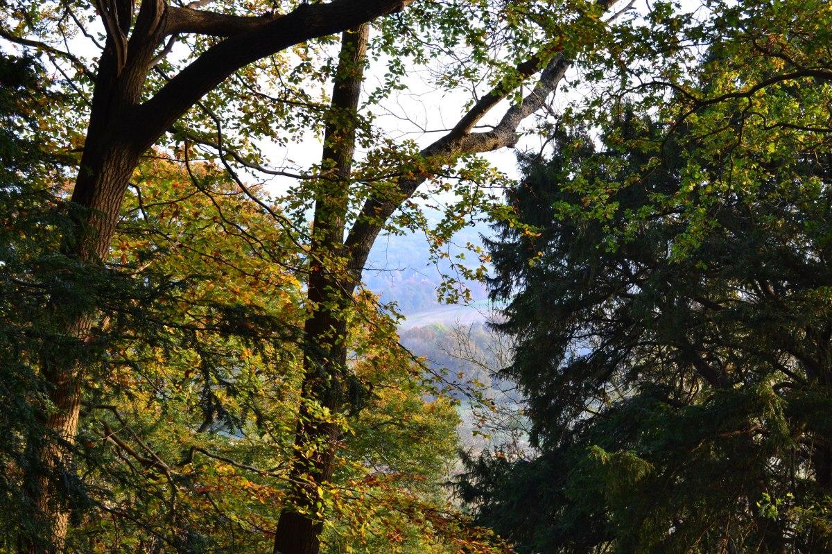 Near Ightam Mote/Bitchet Green, autumn