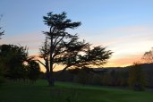Cedar of Lebanon tree, Shoreham