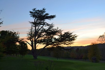 Cedar of Lebanon tree, Shoreham