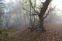 Ide-Hill-fog-trees-2