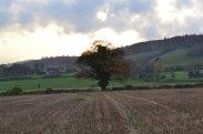 Solitary oak on Shoreham to Eynsford walk