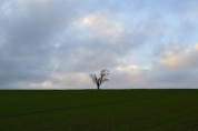 Lonely tree, nr Eagle Heights, Eynsford