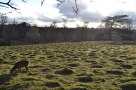Strange terrain at Knole