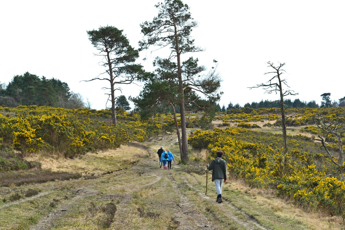 Ashdown Forest walking in Eeyore's Gloomy Place