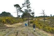 Ashdown Forest walking in Eeyore's Gloomy Place