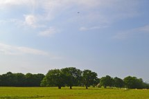 The three oaks with a Tiger Moth biplane