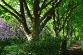 Path at Chiddingstone
