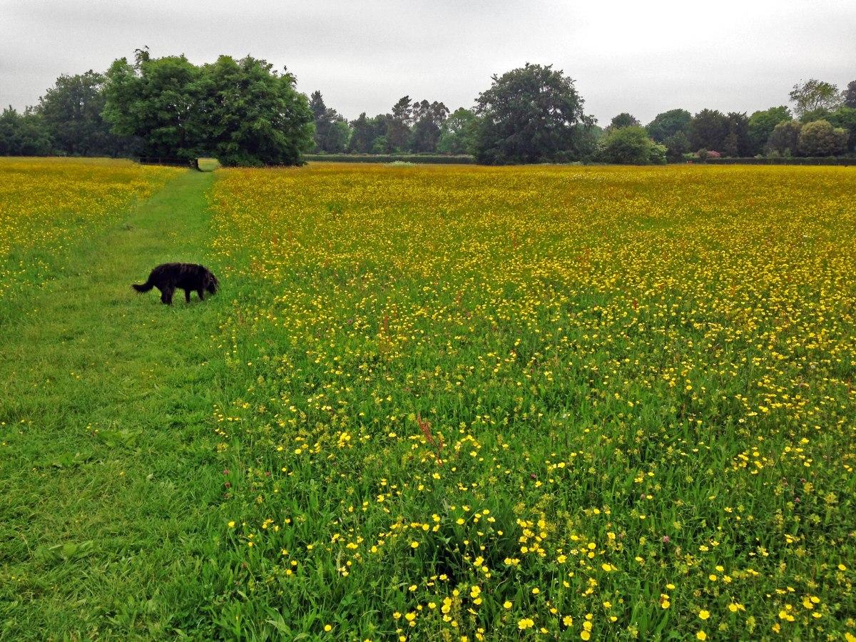 Darwin's meadow