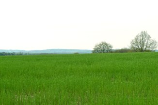 Hazy view of the Greensand Ridge and Ide Hill from the path near Penshurst