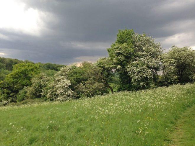 Hawthorn on Downe walk