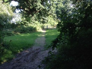 Just after the holloway section turn right and go through THIS kissing gate next to a strip of meadow