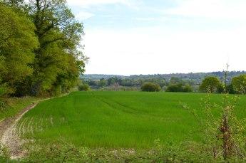Near Penshurst