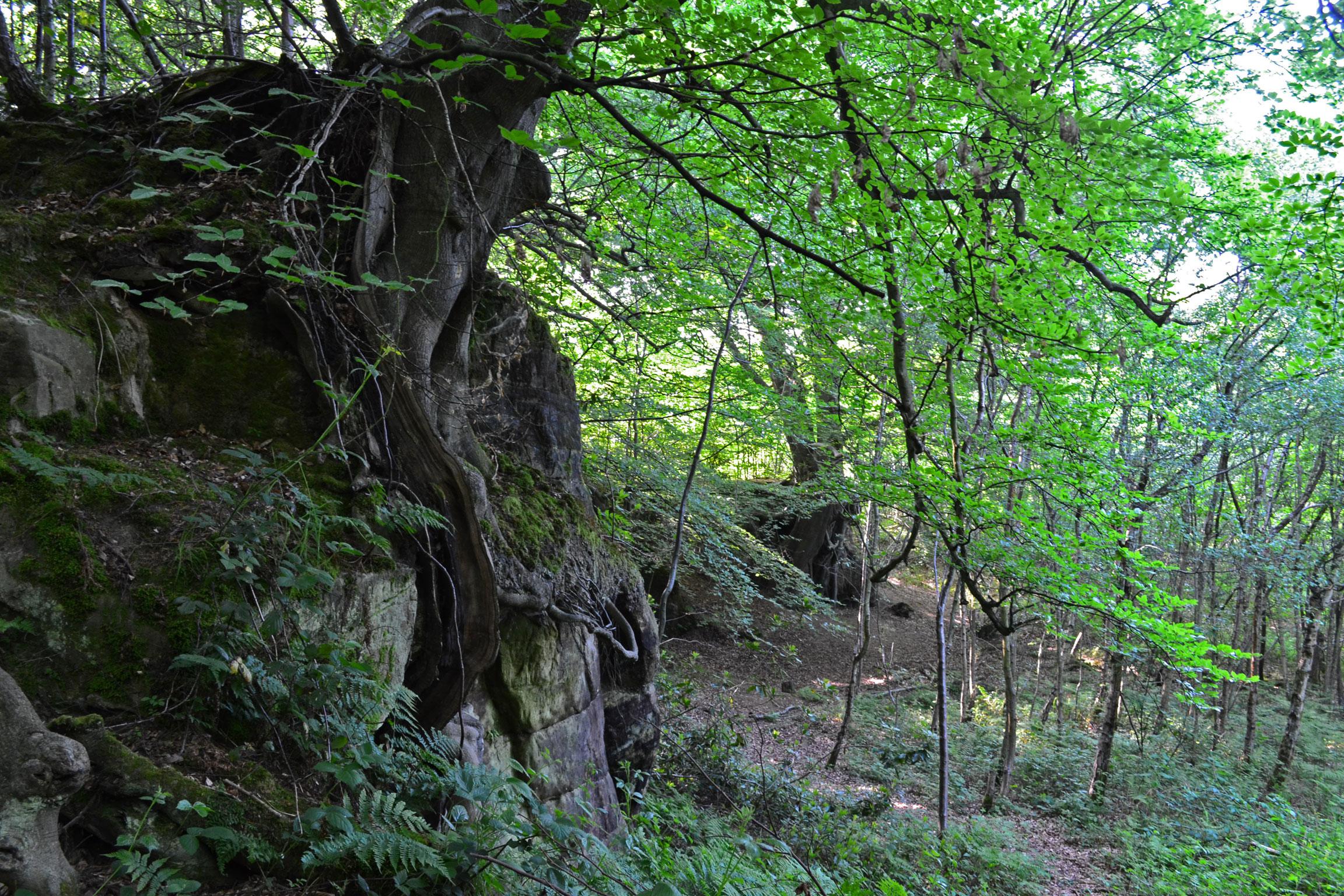 Sandstone at hill hoath hever kent walks near london for Eden hill walk in