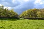 Mid-spring near Chiddingstone