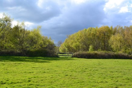 Mid-spring near Chiddingstone