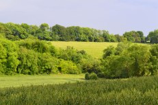 Hillside field near Downe
