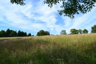 Hillside meadow, Downe