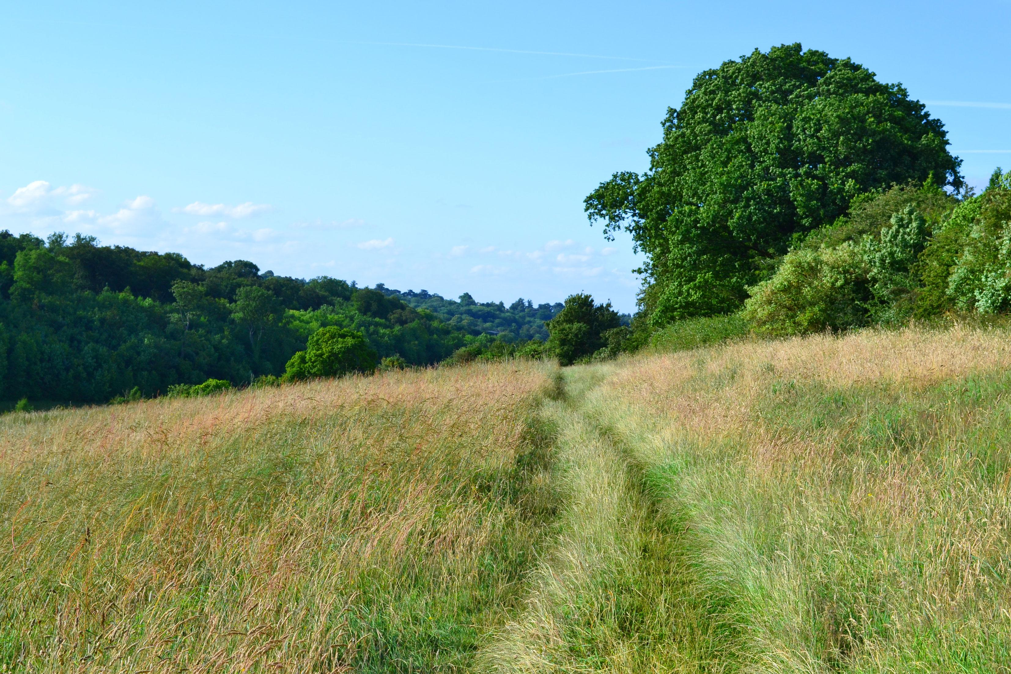Walk 1 Downe Circular 2 6 Miles Kent Walks Near London