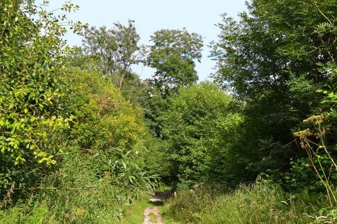 Hidden valley path on way to Ightam Mote