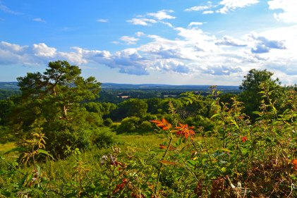 Weald view on One Tree Hill walks
