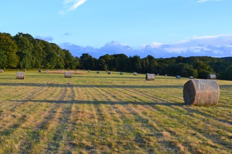 Hay bales close to Darwin's Sand Walk, Downe