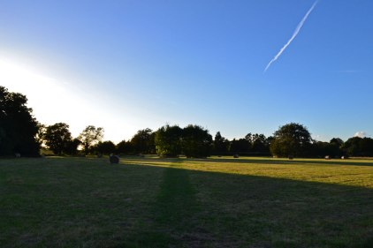 Between point 3 & 4. Darwin's field, late September, Downe