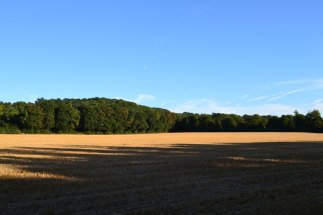 Field and sky, late summer, Shoreham