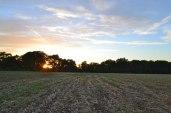 Downe, sunset