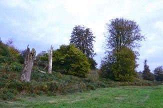 Knole trees