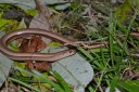 slow-worm-nice