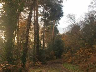 Pines, Petts Wood