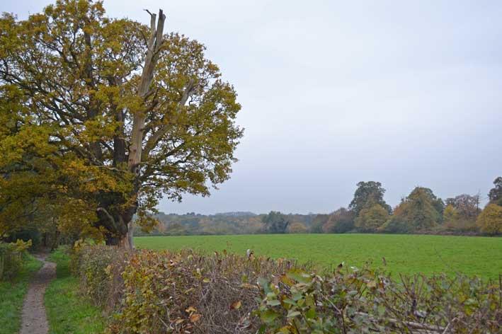 Hawkswood estate