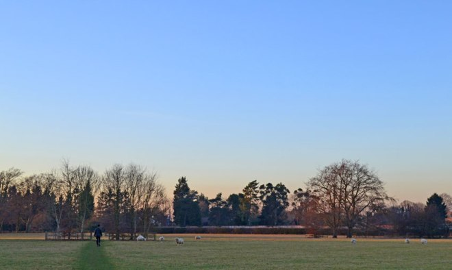 Field next to Downe House