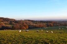Near Scord Wood