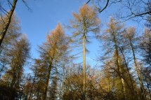 Larches point 2