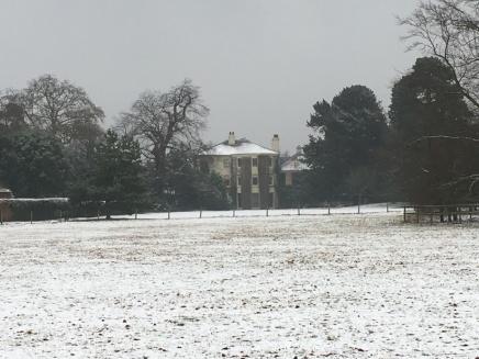 Snowy Downe