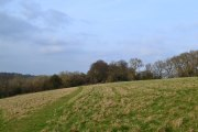 Downe, mid-March
