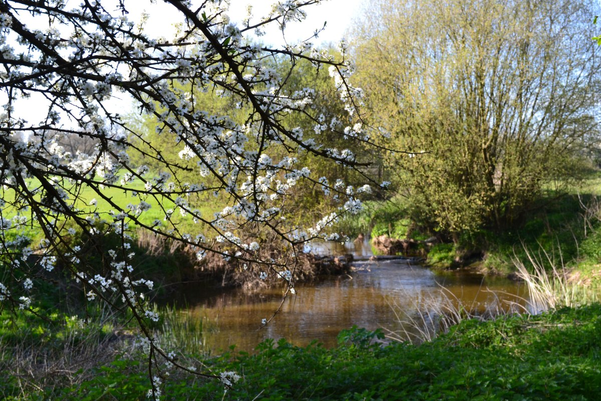 Chiddingstone walk. River Eden, near Penshurst, April